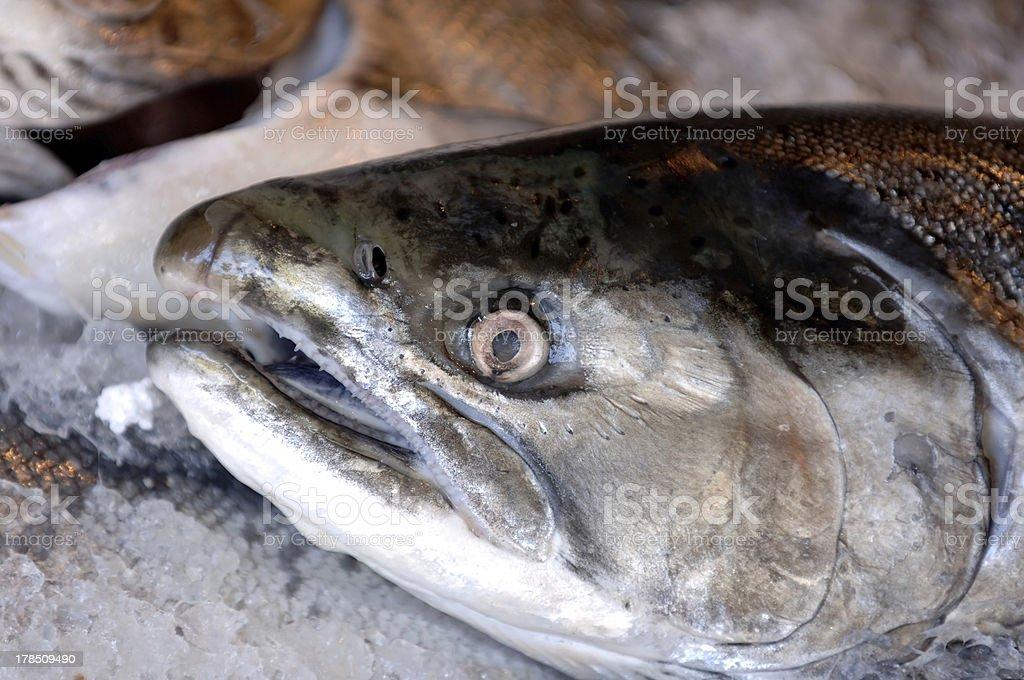 Close up of fresh salmon royalty-free stock photo