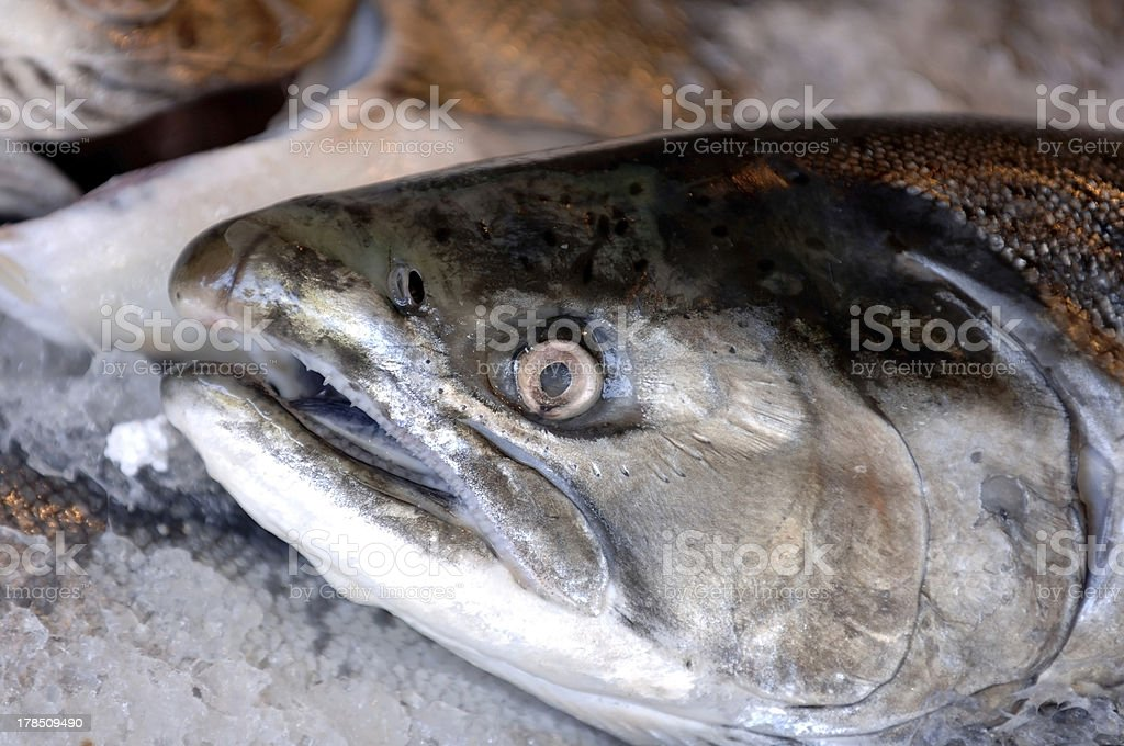 Close up of fresh salmon stock photo