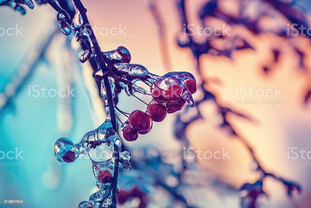 Close Up of Frozen Crab Apples - Retro stock photo