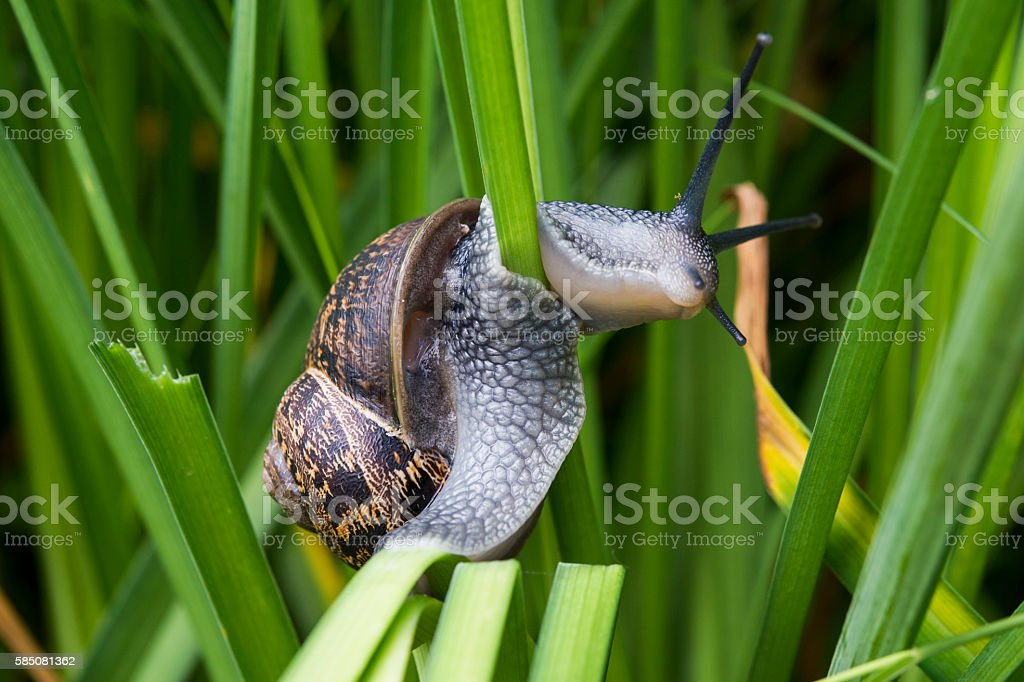Close up of garden snail on plants during summer stock photo