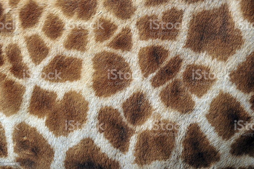 Close up of giraffe fur stock photo