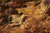 Close up of golden ferns