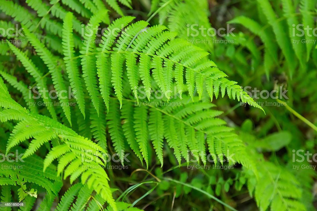 close up of green fern stock photo