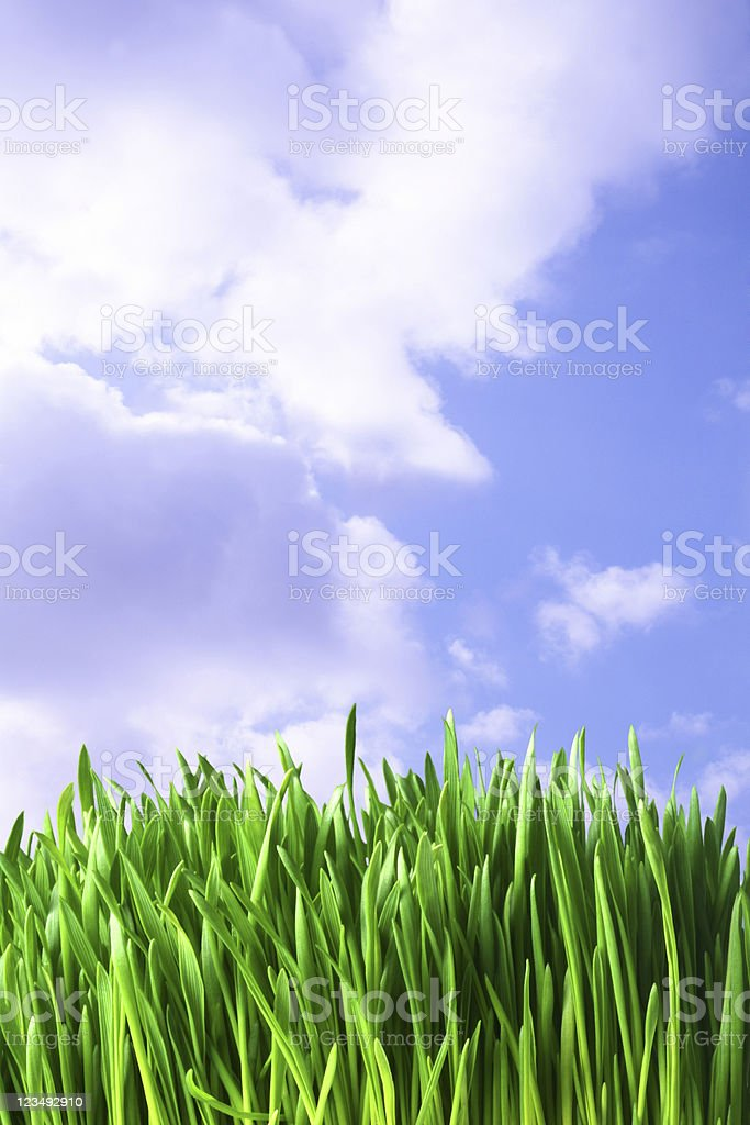 close up of green grass stock photo