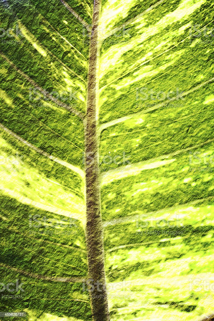 close up of green leaf royalty-free stock photo