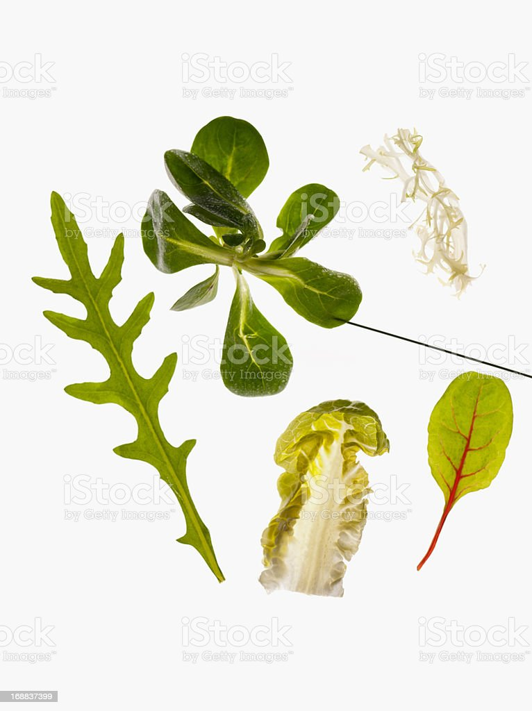 Close up of green vegetable leaves stock photo