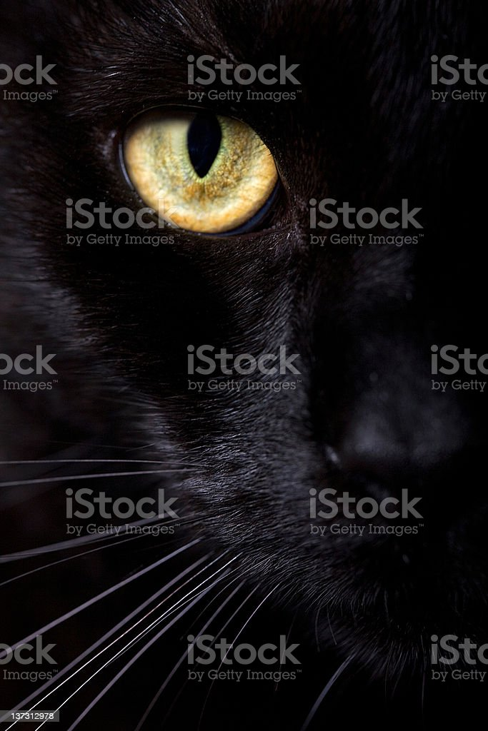 Close up of half face of a black cat stock photo