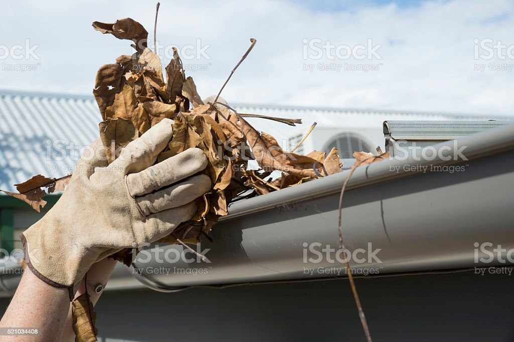 Close up of hand holding leaves stock photo