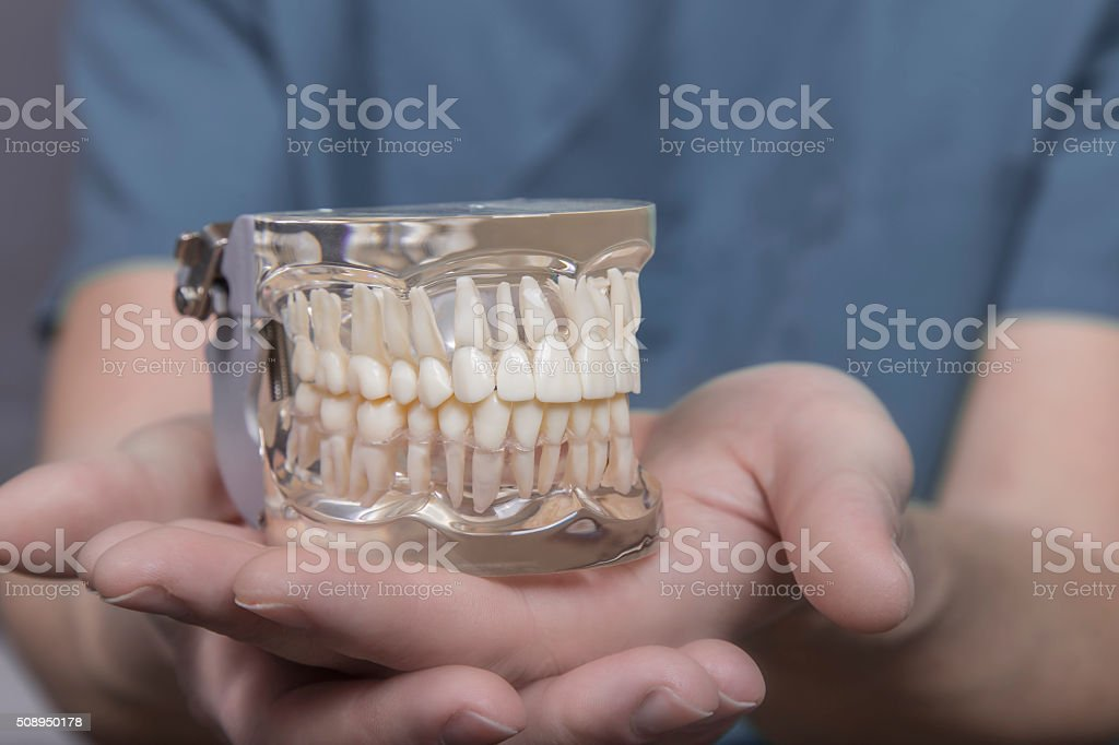 Close up of hand holding mouth model stock photo