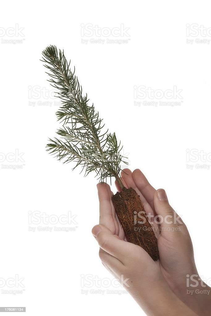 Close up of hands holding a  young tree. royalty-free stock photo