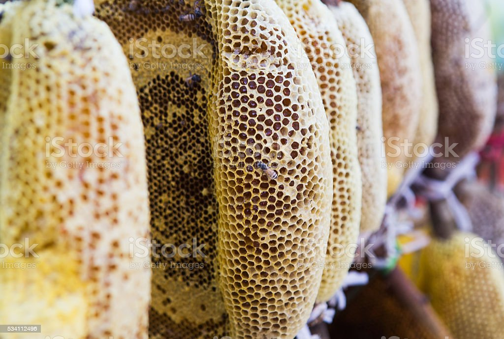 Close up of honey nest, with bee on honeycomb stock photo