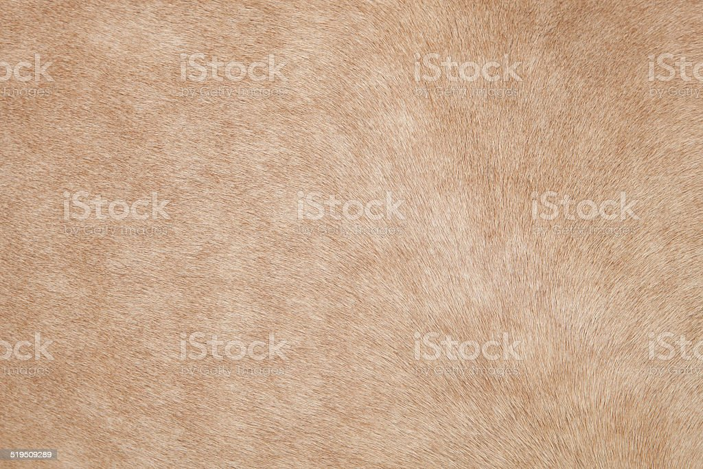 close up of horse hair,fur, skin, leather stock photo