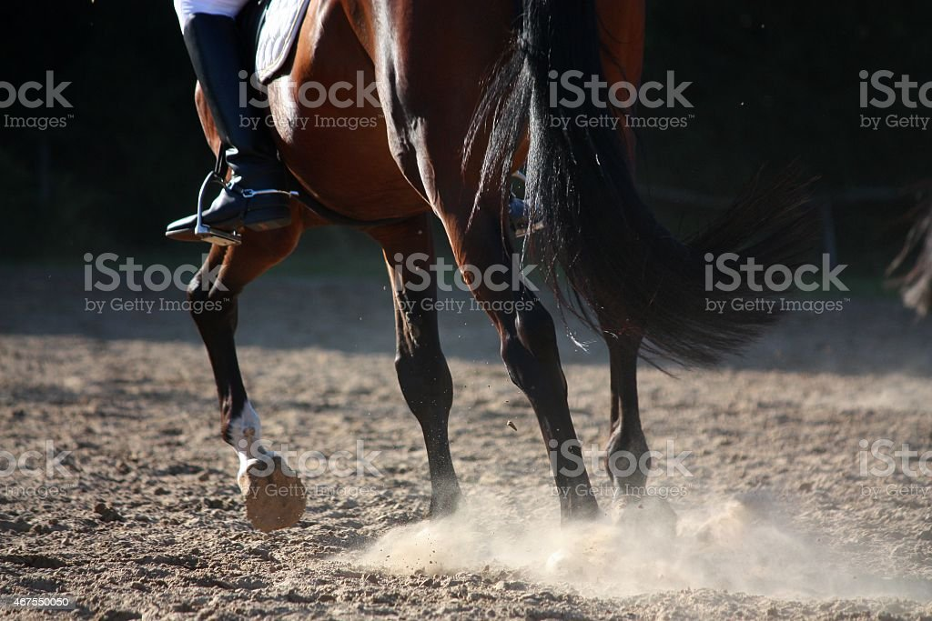Close up of horse legs running stock photo
