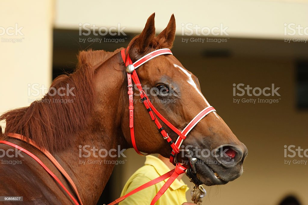 Close up of Horsehead royalty-free stock photo