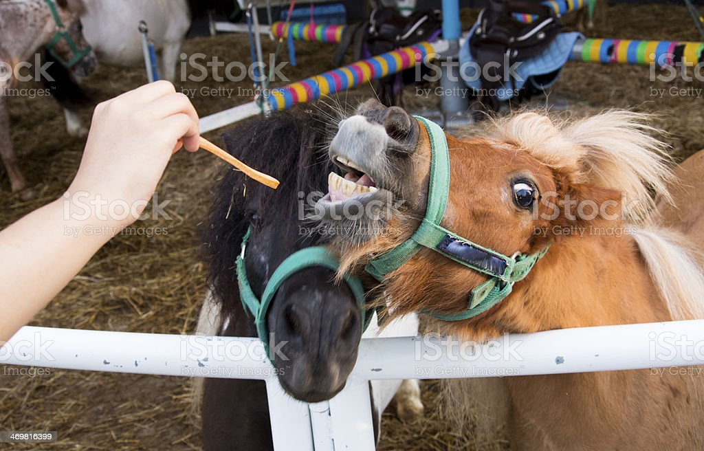Close up of horse's mouth with bad teeth stock photo
