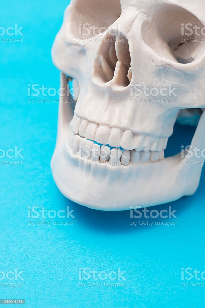 close up of human skull model stock photo
