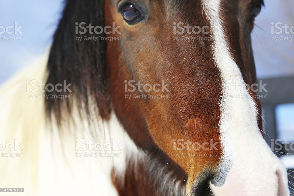Close up of kind horse under blue sky royalty-free stock photo
