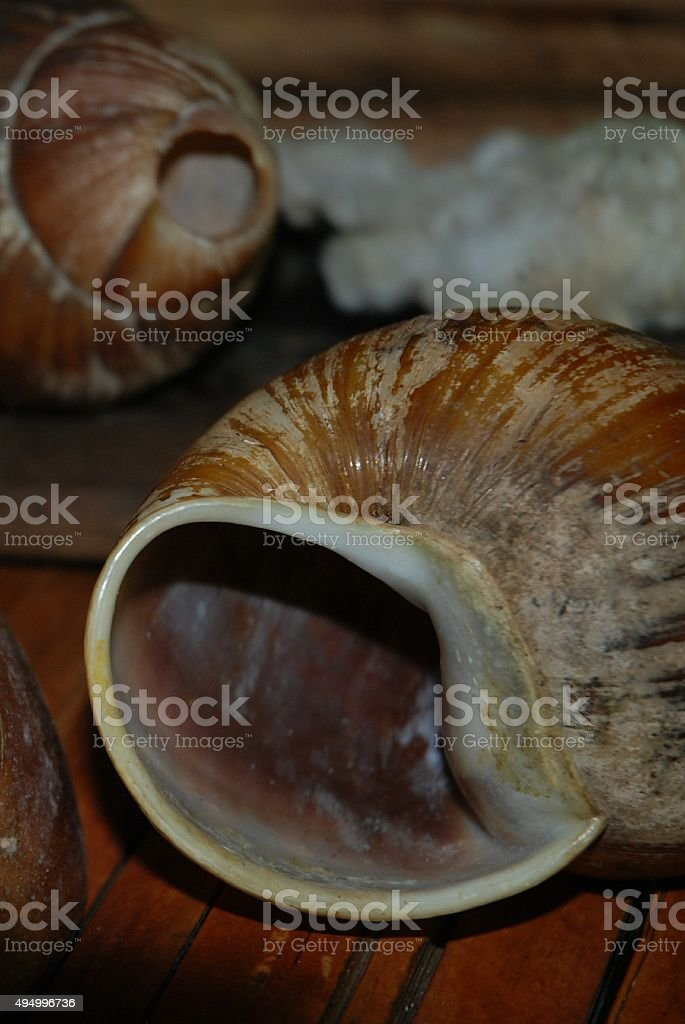 Close up of Large, Empty Snail Shell royalty-free stock photo