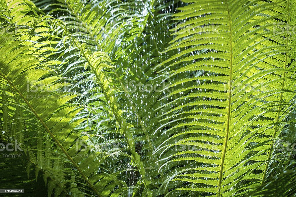Close up of leaf fern in tropical rainforest stock photo