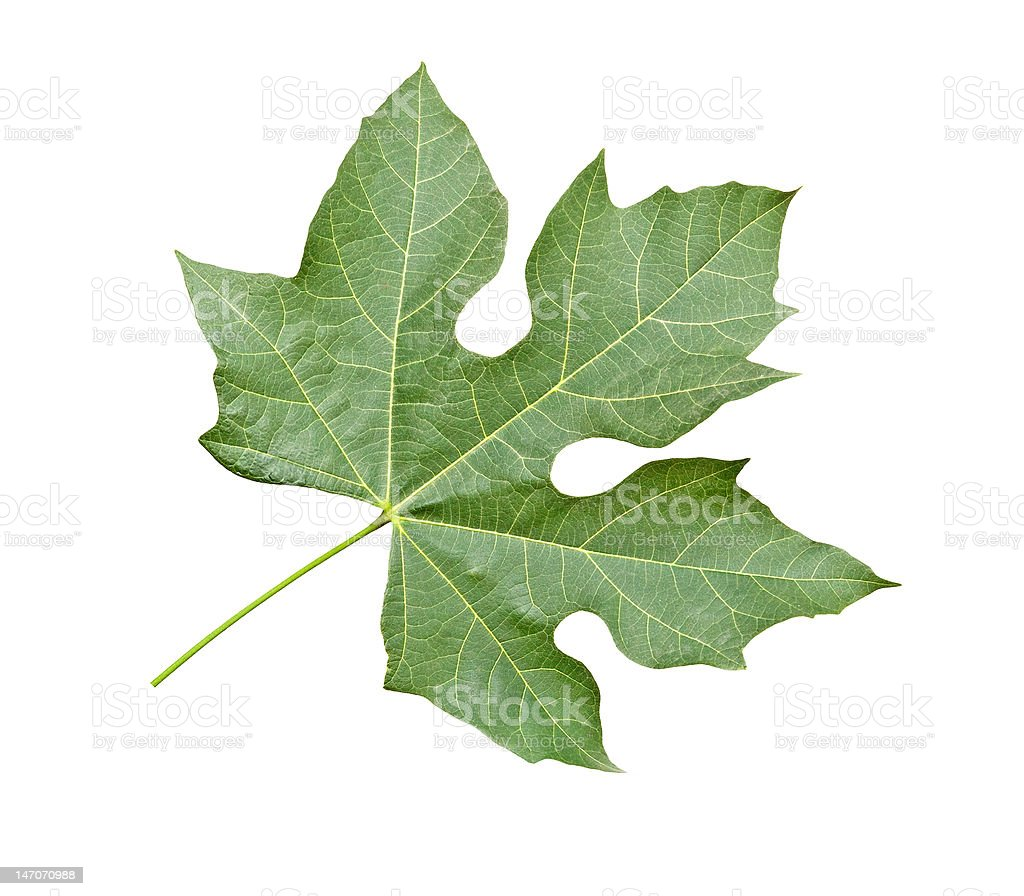 Close up of leaf stock photo