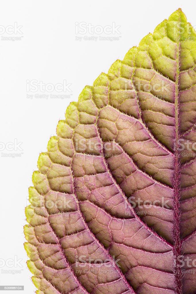 Close up of leaf underside stock photo