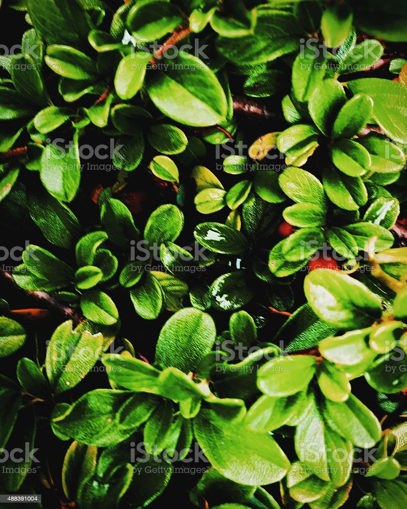 Close up of leaves royalty-free stock photo