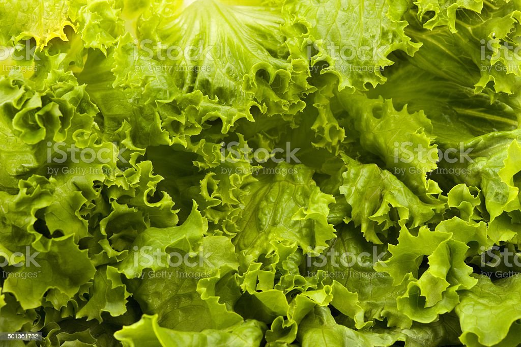 close up of lettuce leaves stock photo