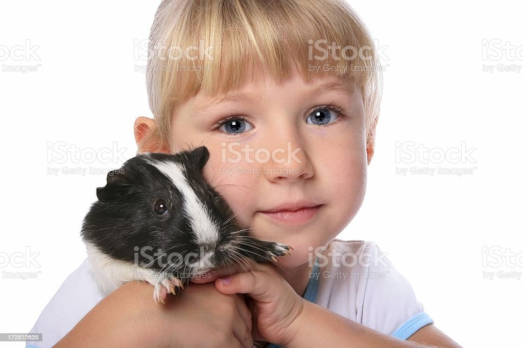 Close up of Little Girl holding cuddling pet guinea pig royalty-free stock photo