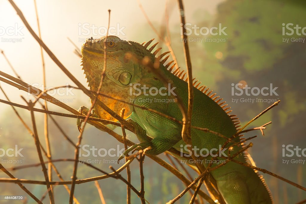 Close up of lizard on the tree stock photo