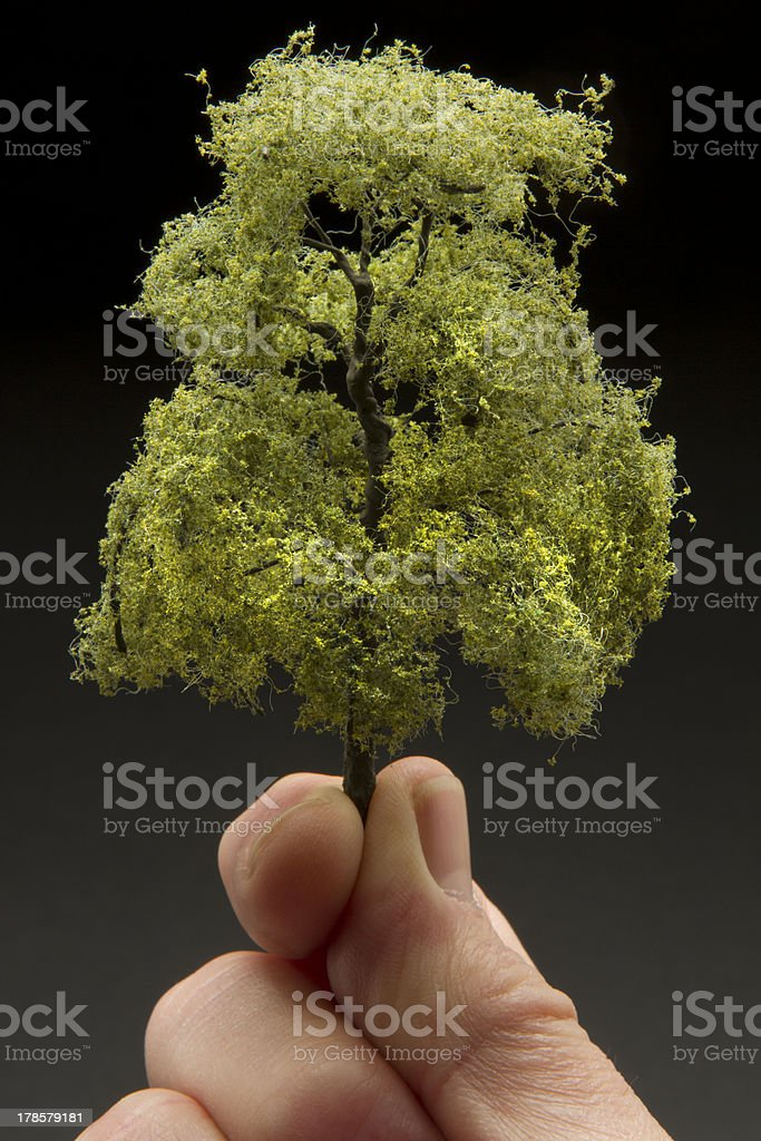 Close up of man holding a tree stock photo