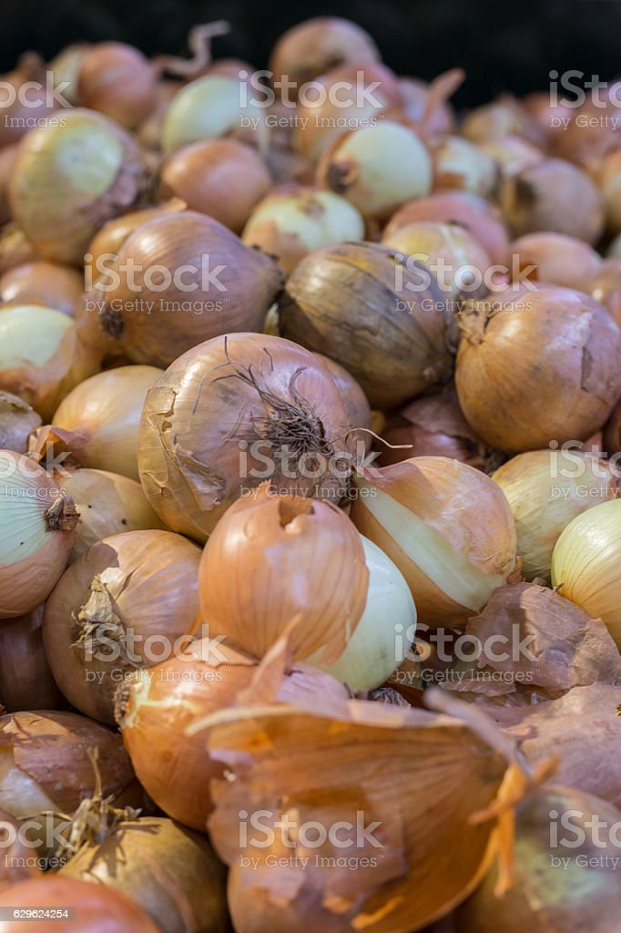 Close up of many onion. stock photo