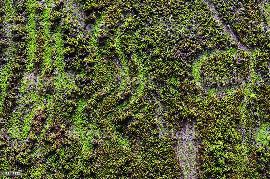 close up of moss royalty-free stock photo