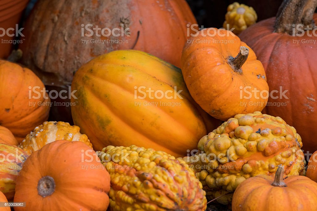 Close Up of Multiple Pumpkins and Squash stock photo