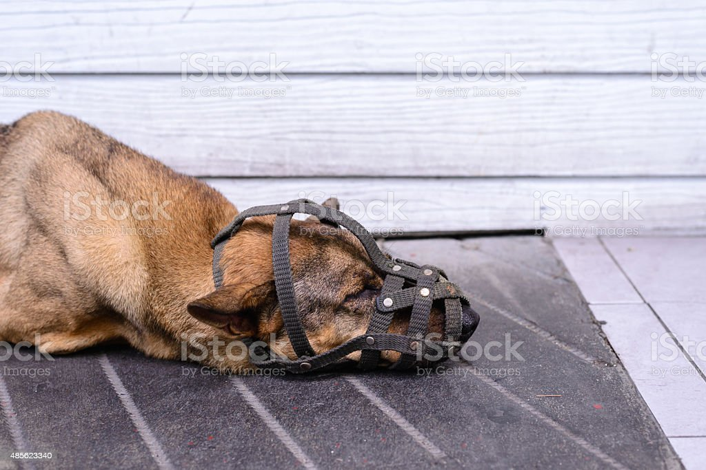 Close up of muzzled dog sleeping on cement floor. stock photo
