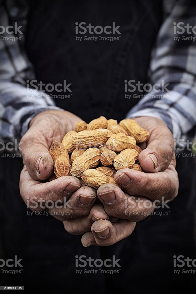 Close up of old man's hands holding peanuts in shell stock photo