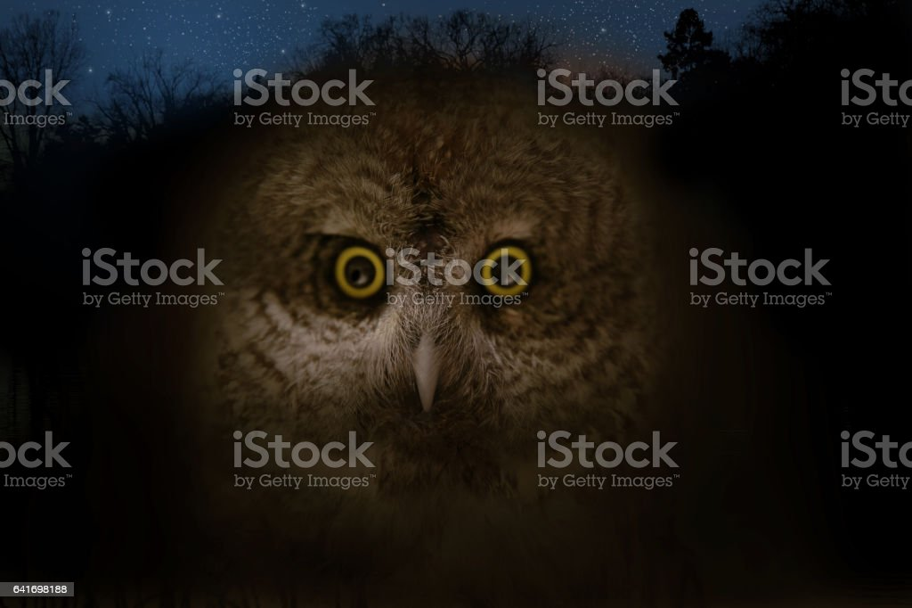 Close up of owl face and night sky. stock photo