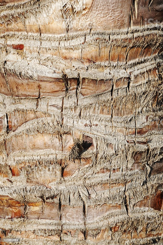 Close Up Of Palm Tree Bark Background royalty-free stock photo