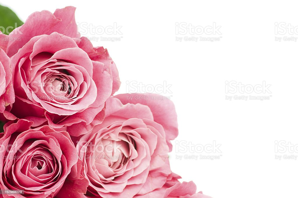 Close up of pink roses along lower left edge of photo royalty-free stock photo