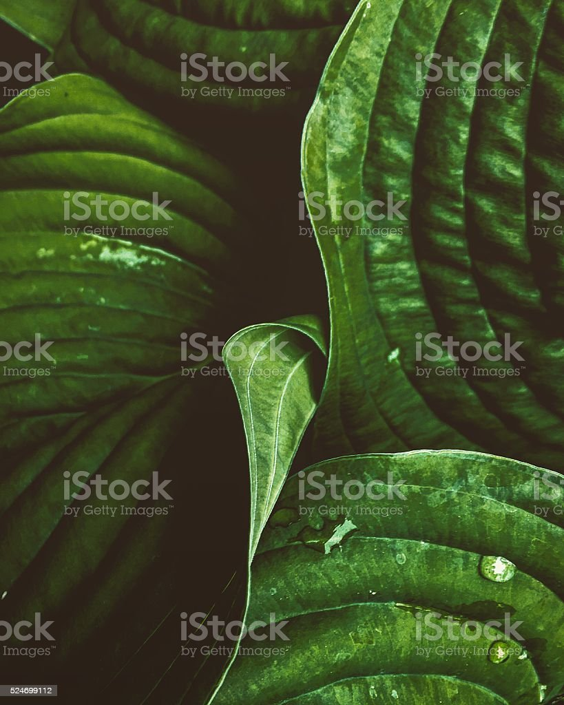 Close up of plant leaves stock photo
