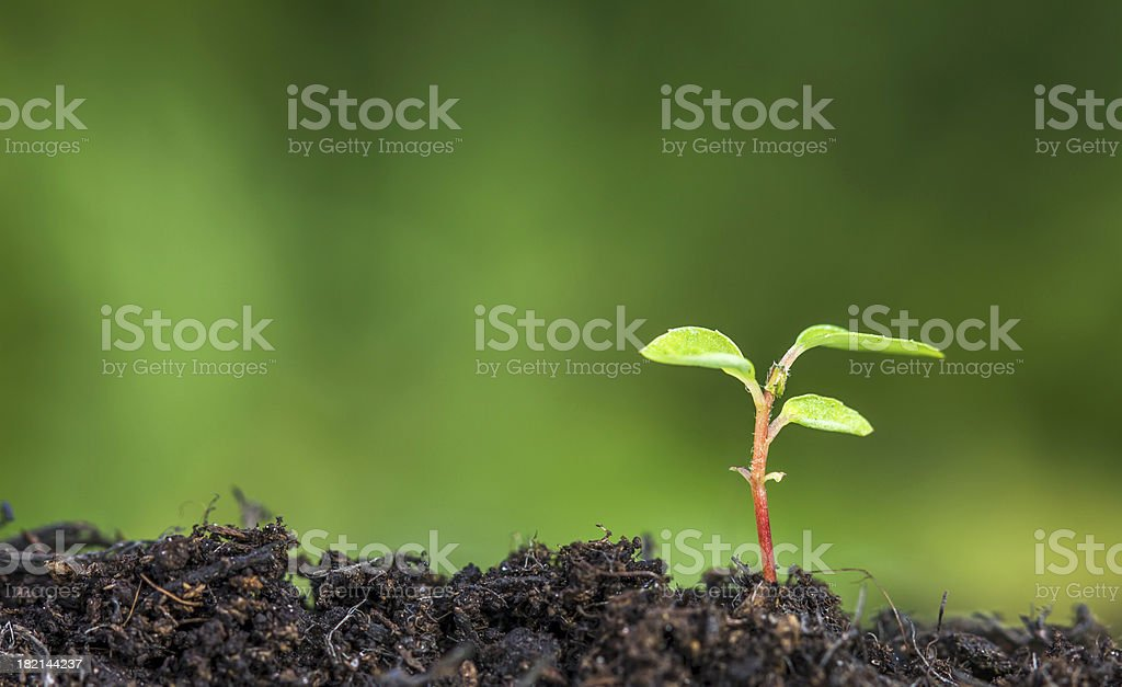 Close up of plant sprouting from the ground stock photo