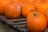 Close up of Pumpkin on Wooden Pallet
