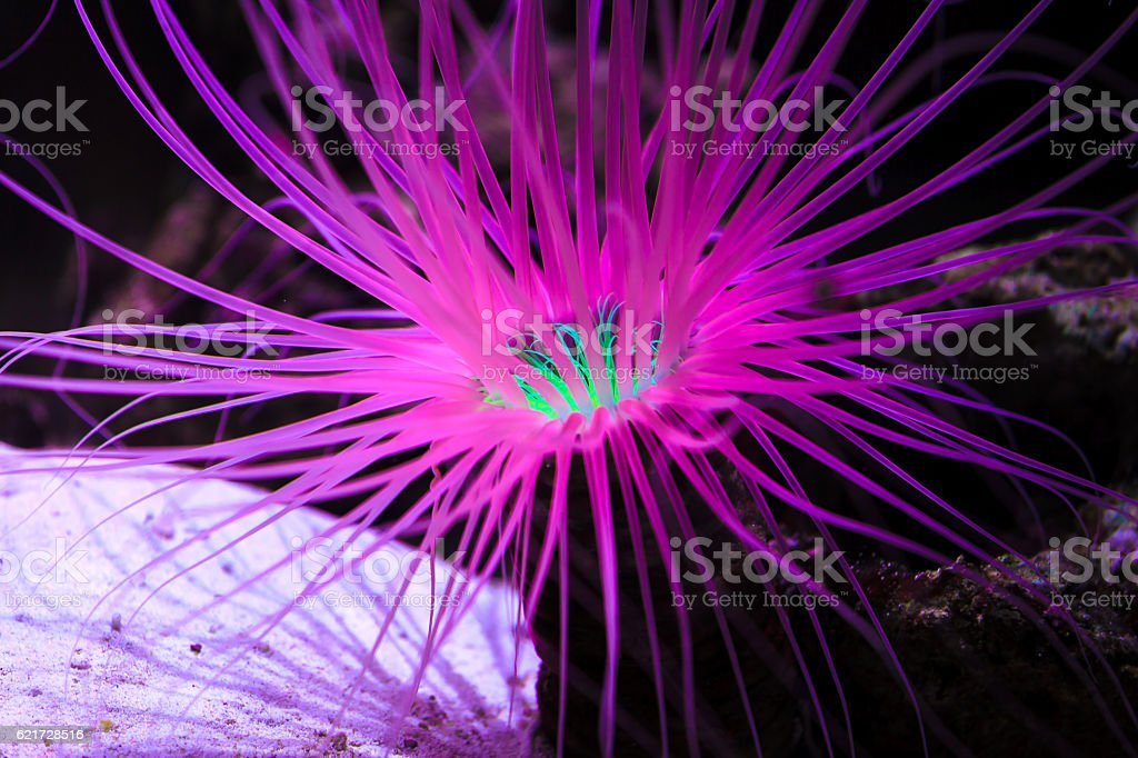 Close up of purple coral reef underwater stock photo