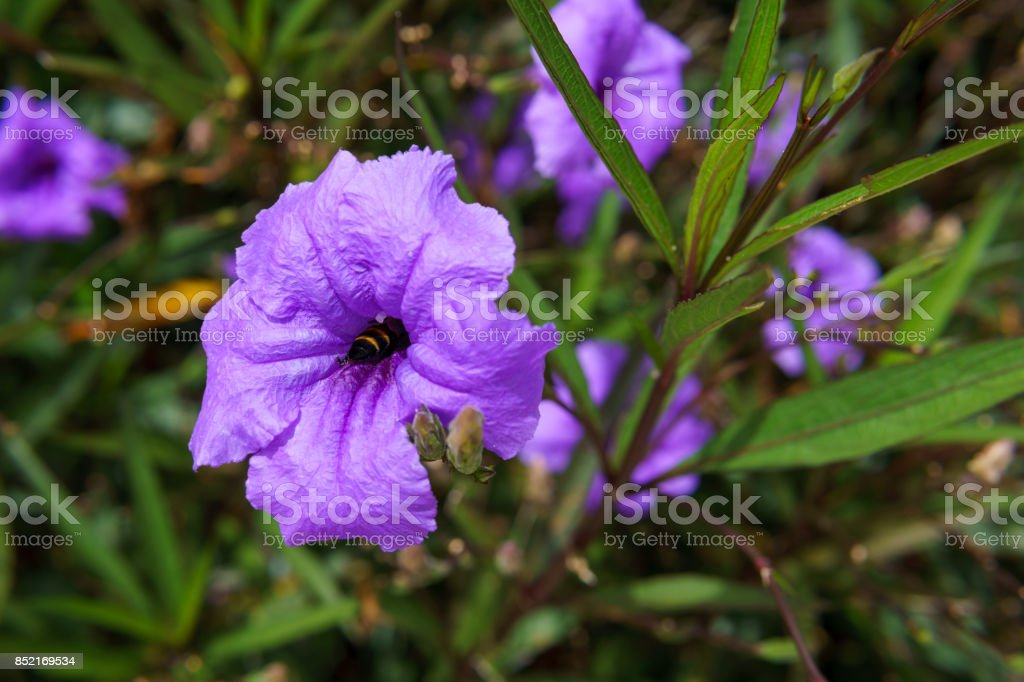 close up of purple flower with green leaf for abstract background. stock photo
