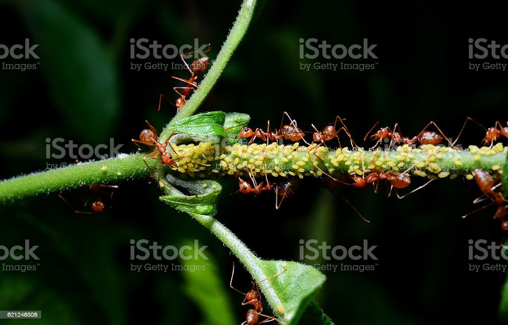 Close up of red ant on plant stock photo