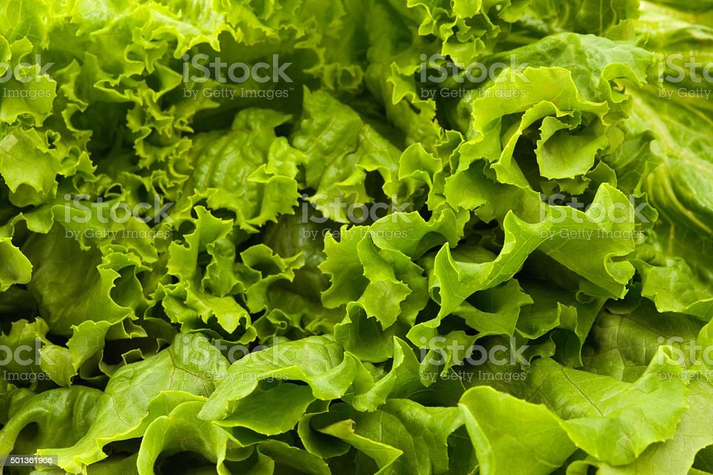 close up of romaine lettuce leaves stock photo