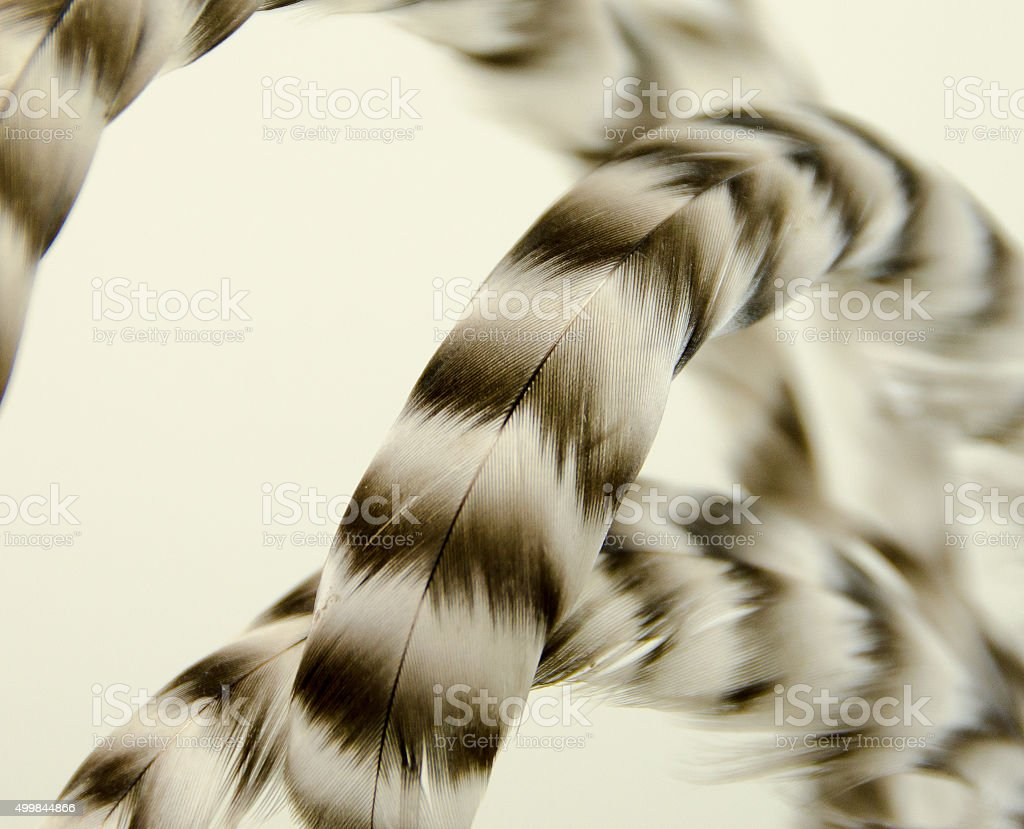 Close Up of Rooster Feathers stock photo