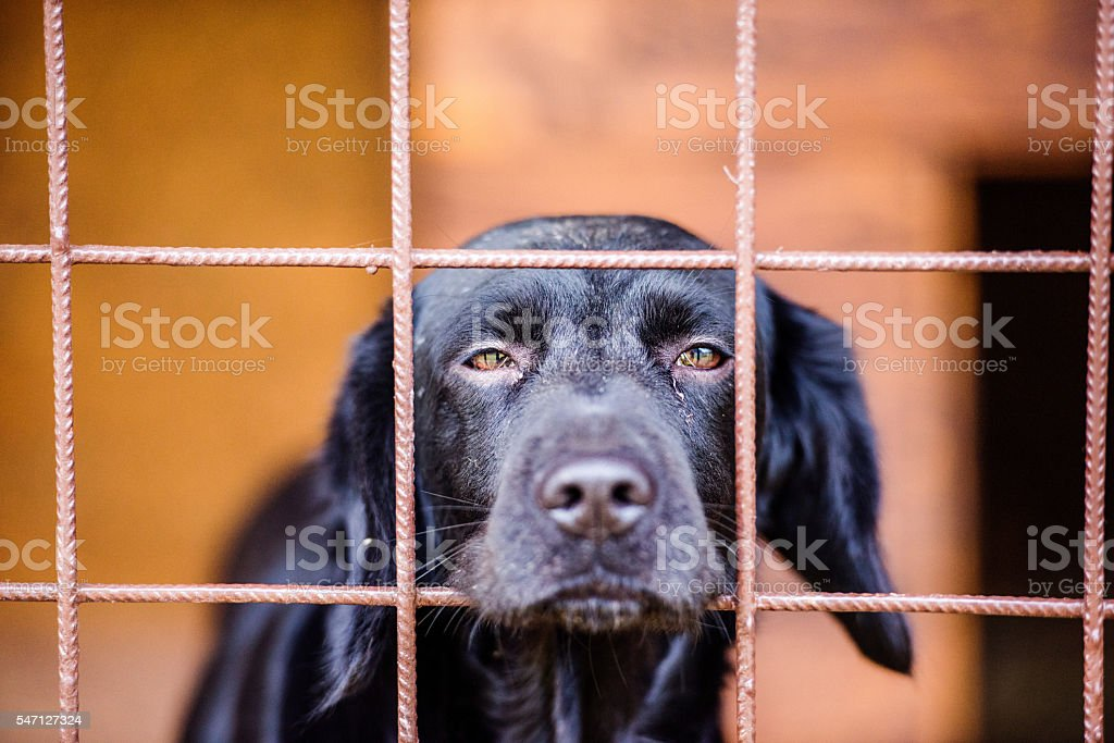 Close up of sad black dog in cage stock photo