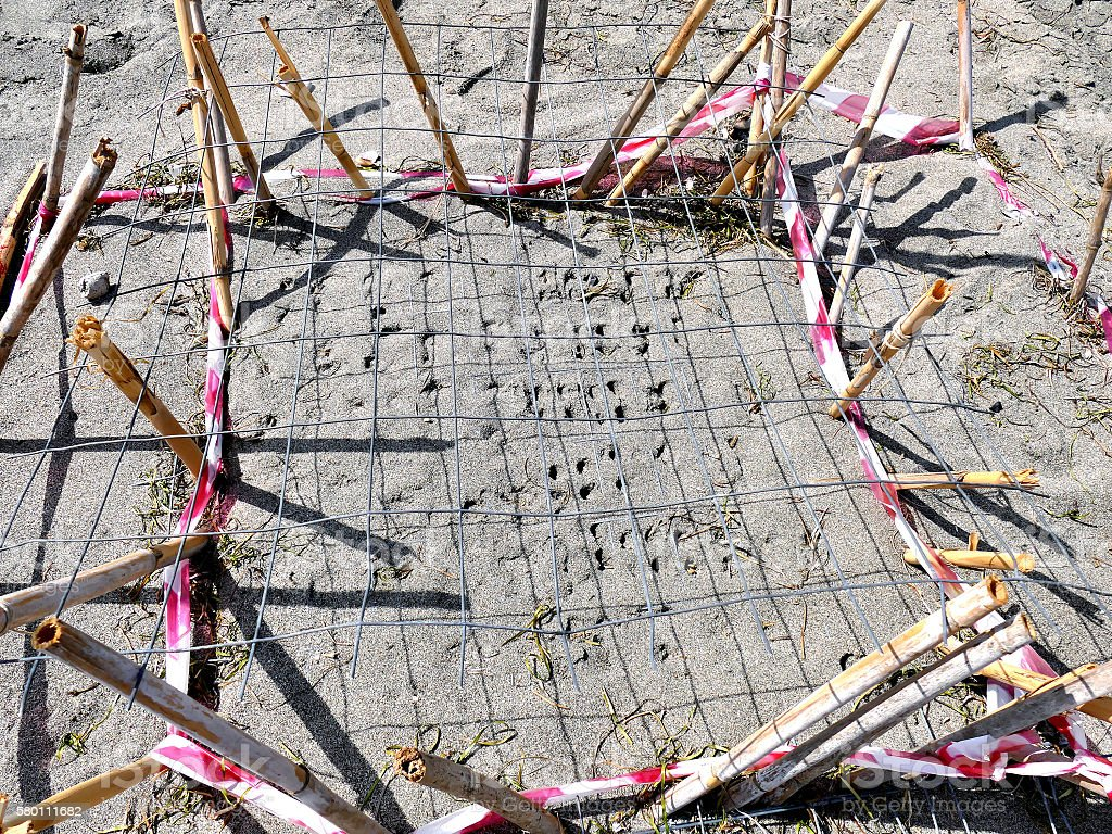 Close up of sea turtle nests on beach in Greece stock photo