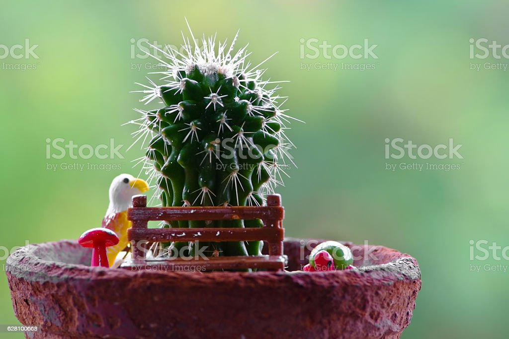 Close up of shaped cactus stock photo