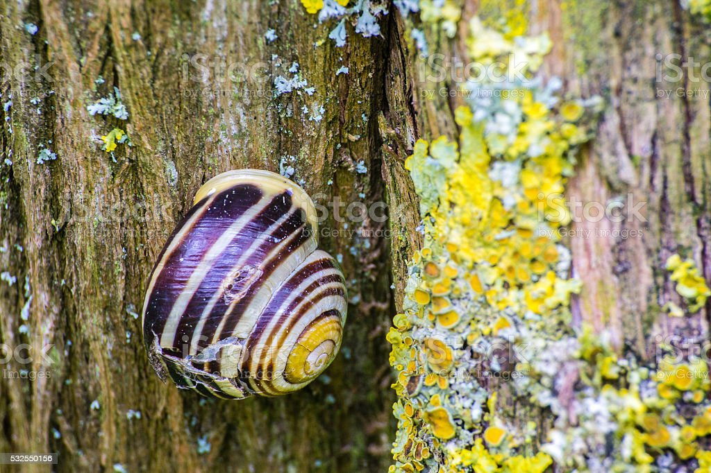 close up of snail on old tree with lichen stock photo